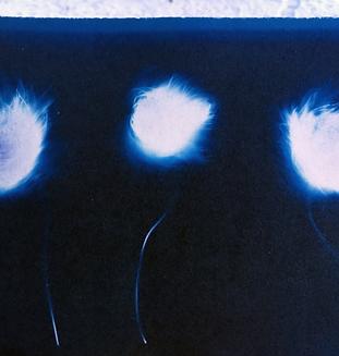 RoosDijkhuizen-Cyanotype-BraemarCreative