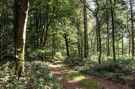Wensum Valley Private Woodland_067.jpg