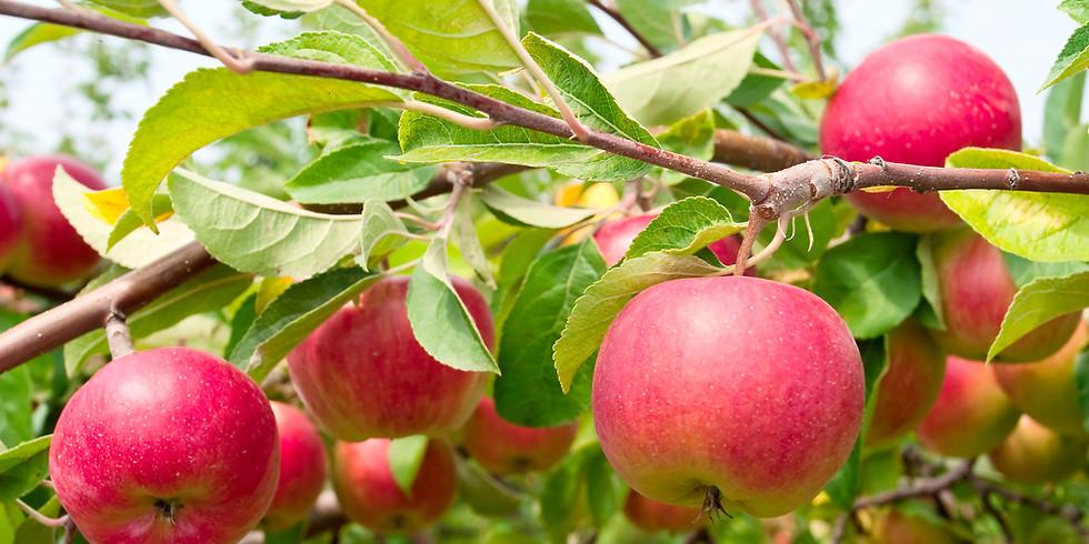Fruit Tree Class $10 per person