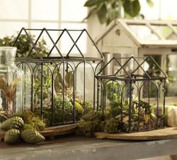 Tabletop-terrarium