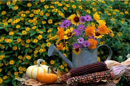 fall-season-planting-spring.jpg