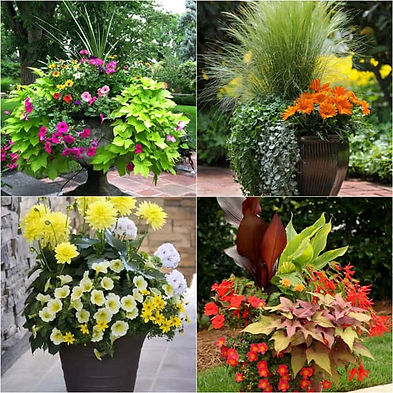 plant containers.jpg