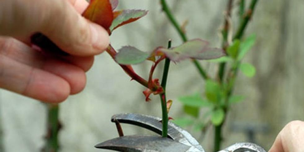 Winter Pruning Workshop