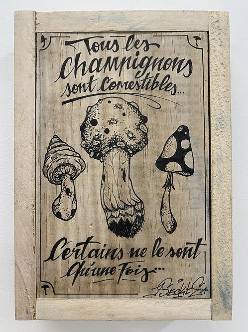 L'INSECTE - Tous les champignons ...