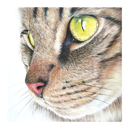 'Eyes Left' Limited Edition Giclee Print