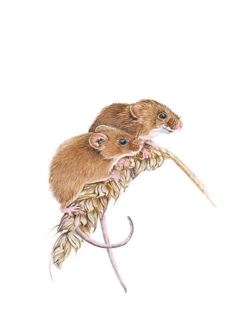 'Double Trouble' Harvest Mouse