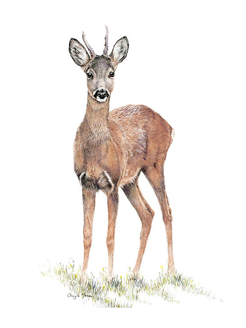 'Young Buck' Limited Edition Giclee Print