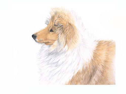 """Kira"" Rough Collie Puppy"