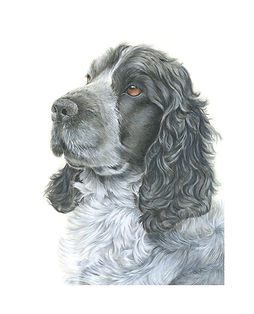 Example of pet portrait