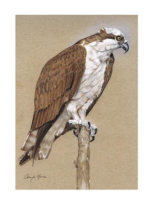 """Osprey """"Balancing Act"""""""