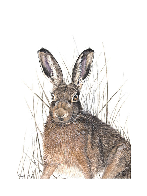 'Hare in Reeds'