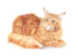 Example of pet portrait