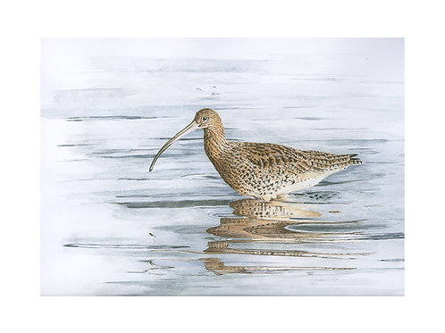 """Curlew """"Waters Edge'"""
