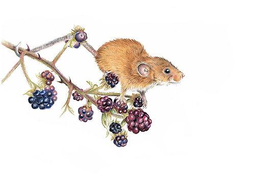 'Blackberry Time' Harvest Mouse