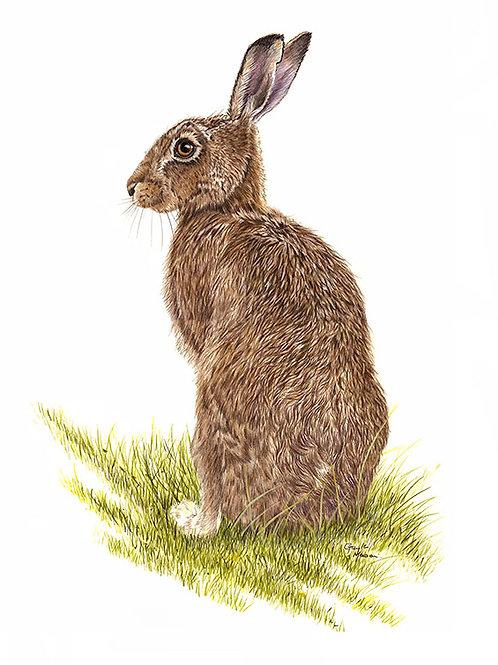 Hare portrait - 'My Best Side'
