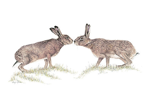 'First Kiss' two hares