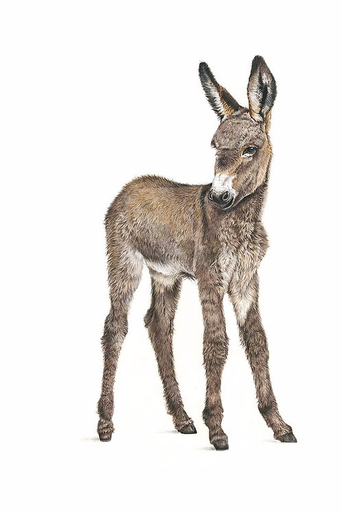 Donkey Foal - Original Art