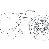 Shiitake | Champignonnière de la frise