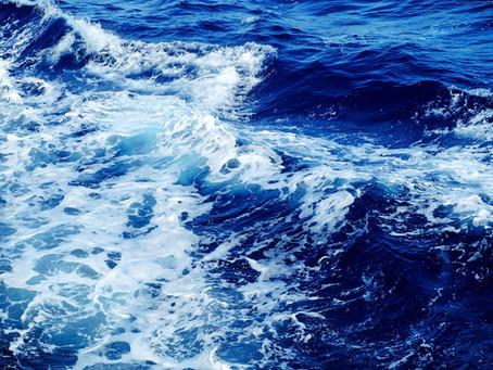 Le plasma marin source de vitalité