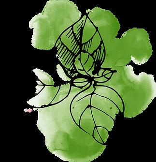 Folhas do watercolour