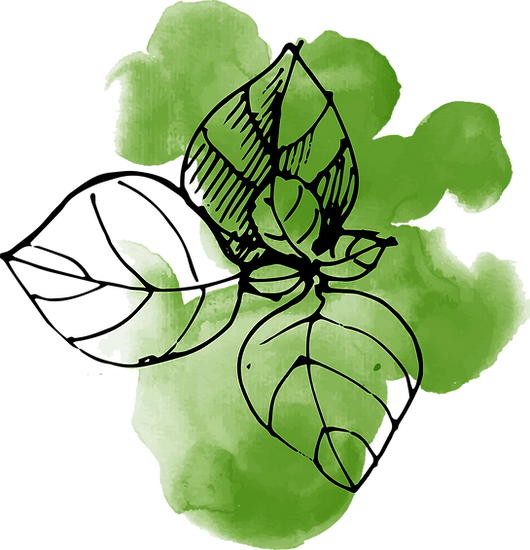 Aquarell Blätter
