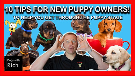 10 Tips for New Puppy Owners.jpg
