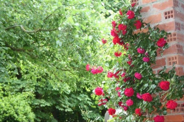 Une propriété fleurie