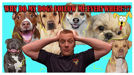 Dogs Follow Me.jpg