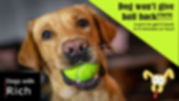 Thumbnail Dog give ball back.jpg