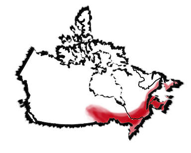 Canada Map Web FT.png