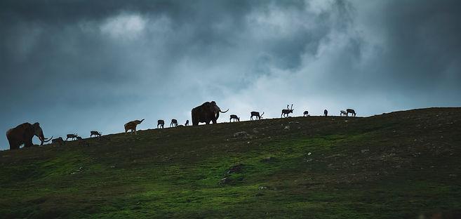 Mammoths on Caribou Ridge.jpg