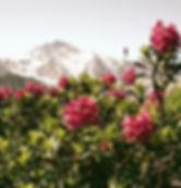 alpine_rosee_active_plant_source_0_edite