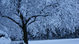 Snow Reminds Me There are Wonders I'll Never Control