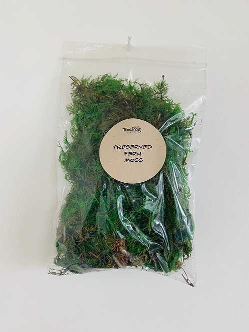 Preserved Fern Moss