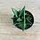 Thumbnail: Haworthia Limifolia