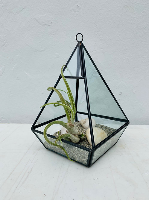 Triangle Terrarium