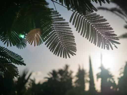 Palmsonntag – ein unbequemer König
