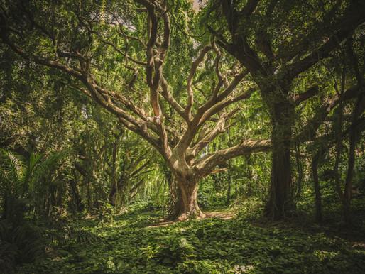 Neulich im Wald