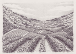 Heine Jones : Crowded House Wine