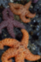 starfish_edited.png