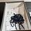 Thumbnail: Kith Genesis 990 Sz 10