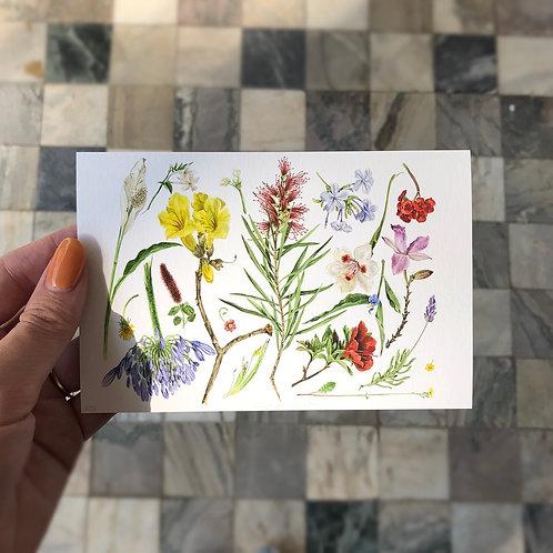 Impressão fine art Flora Pastrinni cartão postal