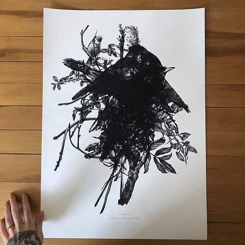 Impressão fine art Pássaros A2