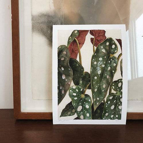 Impressão Fine Art Begônia Maculata