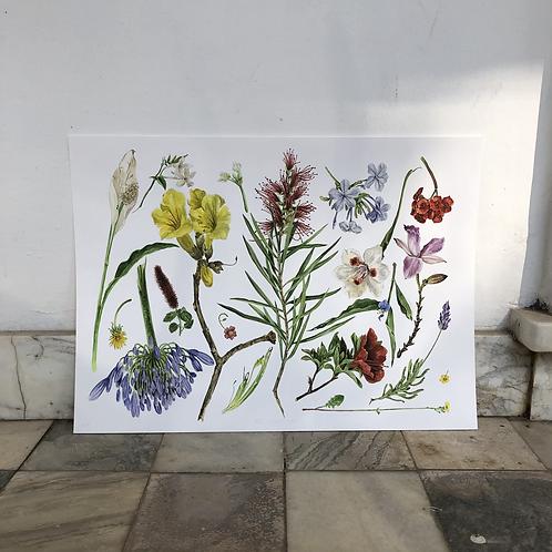 Impressão fine art Flora Pastrini A3