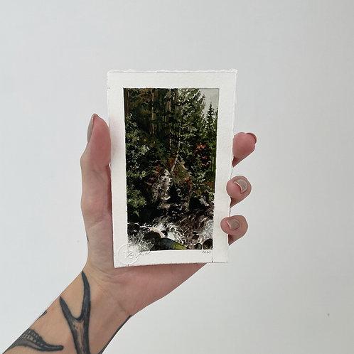 Floresta negra 3   impressão fine art