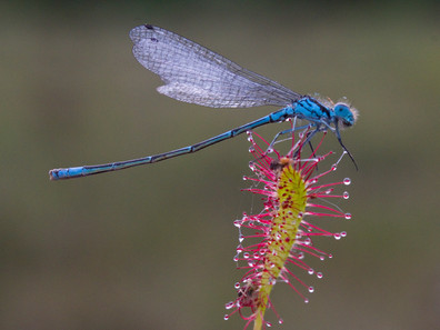 'Blue' by Brian McKenna - Highly Commended