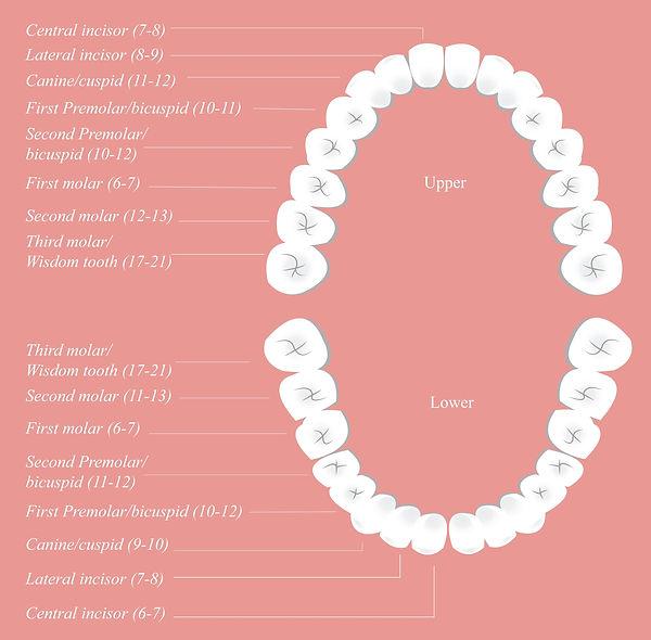 Adult-dental-chart-compressor.jpg