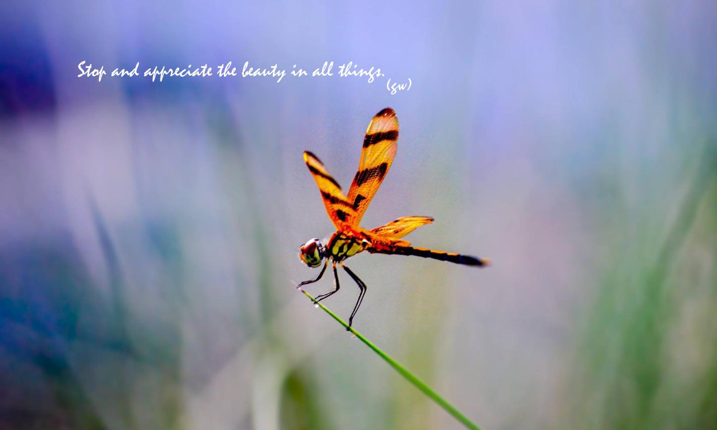 Dragonfly copy_edited