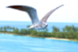 BIRD IN FLIGHT copy_edited.jpg